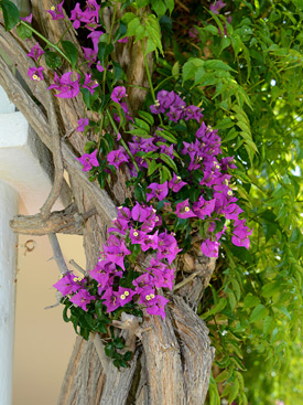 Flowers in the garden at La Calma holiday villa, Estepona